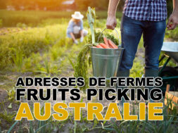 fruit-picking-adresse-australie-img