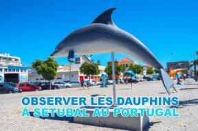 Dauphins-portugal-img