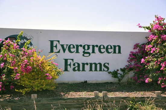 fruits picking en Australie Evergreen farms