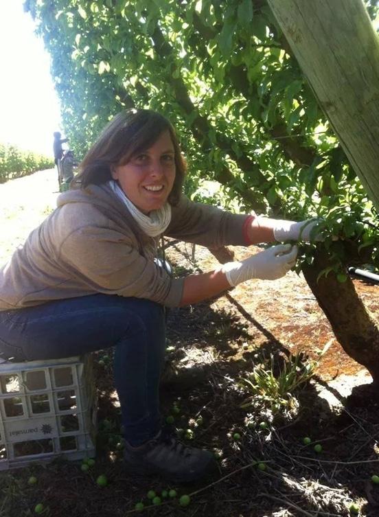 Fruit picking en Australie