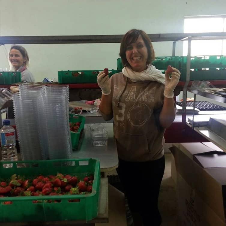 Expérience fruit picking fraises et blueberries