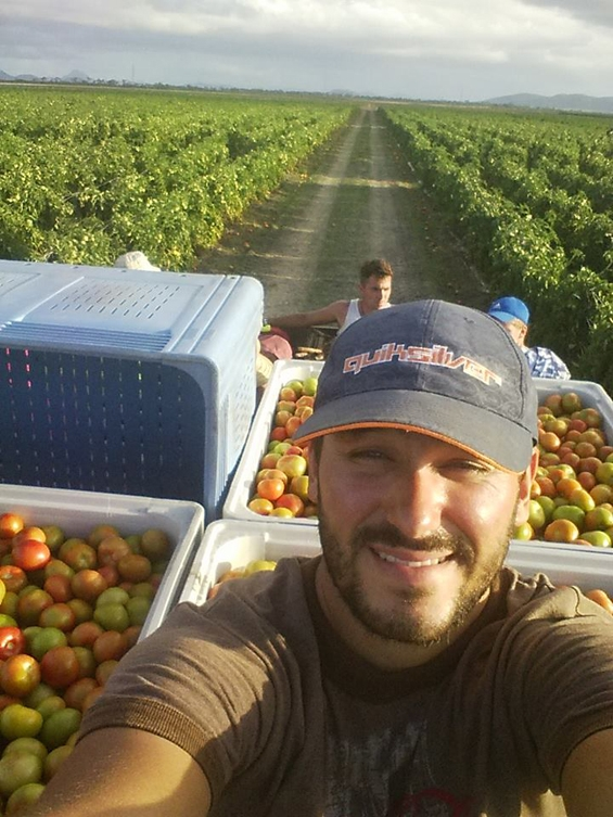 Expérience fruit picking dans les oignons et les tomates