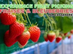 fruit-picking-fraises-blueberrie-cassandre-img