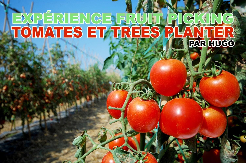 Expérience fruit picking tomates et trees planter