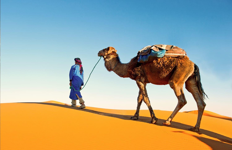 Conseils pour visiter Marrakech et ses alentours - Dromadaire