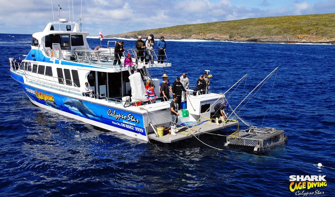 calypso-star-charter-9
