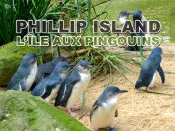 Phillip-island-parade-pingouins-australie-img