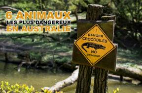 6-animaux-dangereux-australie-img