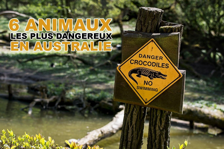 Les 6 animaux les plus dangereux en Australie