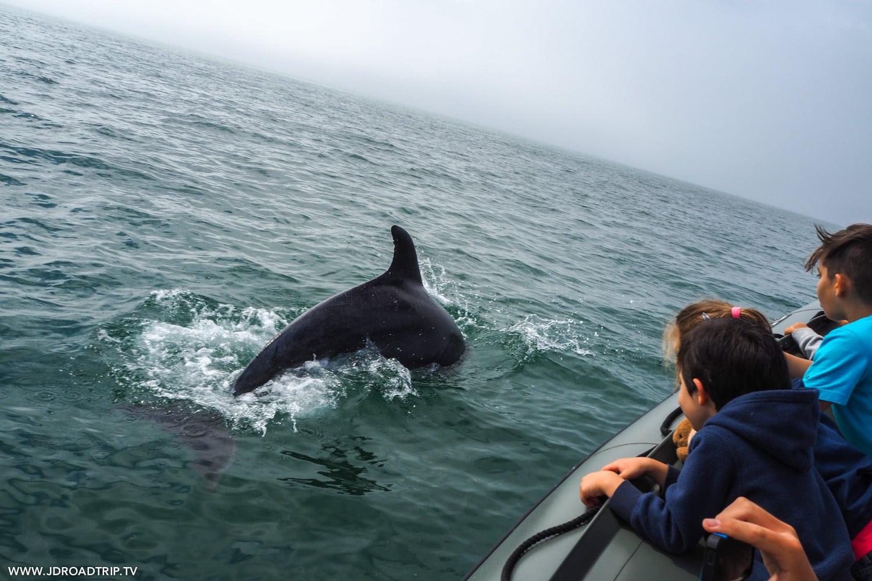 Excursion pour observer les dauphins à Sétubal