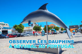 Dauphins-portugal-img
