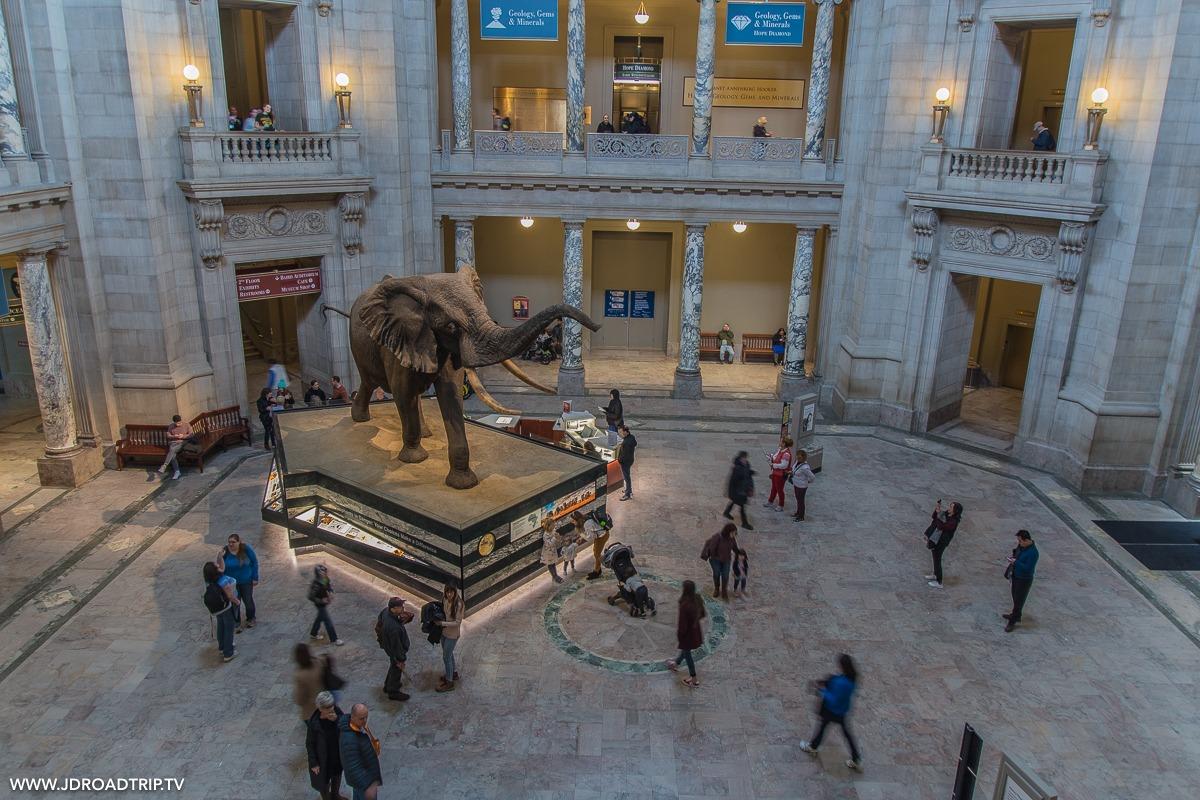 visiter Washington DC en 5 jours - Musée d'histoire naturelle