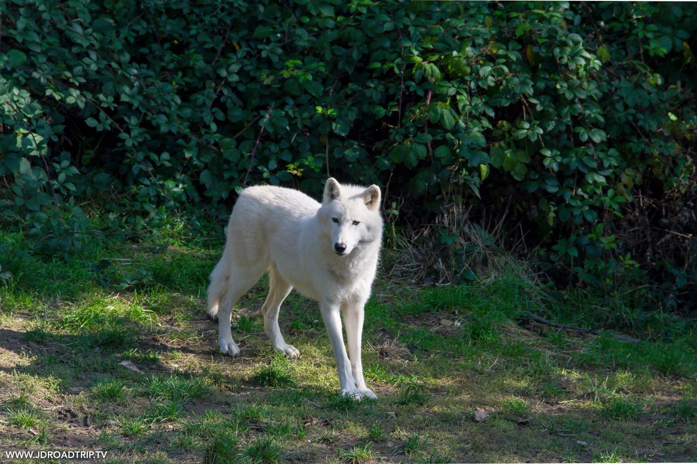 parc aux loups du Gévaudan