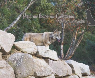 Lozere-Loups-du-Gevaudan-img