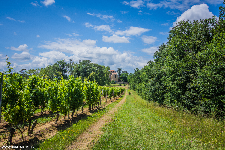 Que faire dans le Gers - Vigne de Saint-Mont